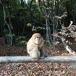 Photo of Affenberg - Monkey Hill