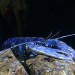 Фотография National Marine Aquarium