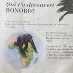 Zdjęcie Lola ya Bonobo