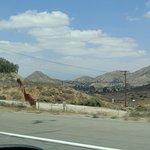 Foto de San Gabriel Mountains