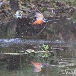 ภาพถ่ายของ Winnall Moors Nature Reserve