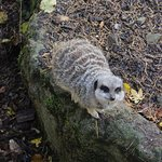 Zdjęcie Porfell Wildlife Park & Sanctuary