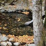 Foto van Uvas Canyon County Park