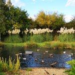 Фотография WWT London Wetland Centre