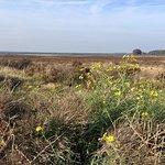 Foto De Hoge Veluwe National Park