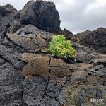 Фотография Dragon Tree Travel