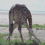 Etosha National Park Day Tours