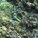 Taken while snorkeling at Molokini Crater using our GoPro Hero5