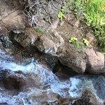Photo of Park Las Aquilas Jungle Park