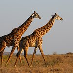 Foto African Bush & Beach Adventures - Day tours