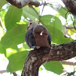 Foto de Ile aux Aigrettes Nature Reserve
