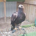 York Bird of Prey Centre Photo