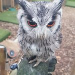 York Bird of Prey Centre Photo