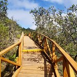 Foto de Fray Jorge National Park
