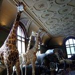 Foto van Natuurhistorisch Museum
