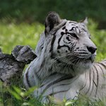 Billede af York's Wild Kingdom Zoo and Fun Park