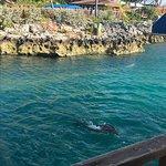 Dolphin Encounters Foto