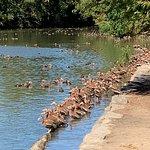 ภาพถ่ายของ Audubon Park