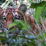 Tiger Tops Karnali Lodge Photo