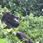 Photo of Bwindi Impenetrable National Park