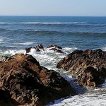 Foto de Praia de Matosinhos