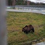 Foto de Yaroslavl Zoo