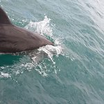 Dolphins in Golfito