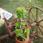 Foto de Agriturismo Biologico Aia del Tufo