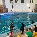 Photo of Dolphinarium Oskar