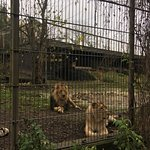 Photo of Korkeasaari Zoo