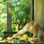 Photo of Sepilok Orangutan Rehabilitation Centre