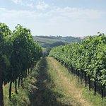 Photo de ViaDeliziosa Wine and Food Walks
