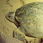 Photo de Turtle Island Park