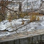 Foto de Camden Harbor Park and Amphitheatre