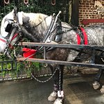 Bilde fra Old South Carriage Company