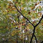 Billede af Wirral Country Park