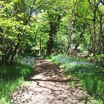 Why not walk of lunch with a stroll along the Tryweryn Trail?