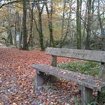 Take a stroll along the Tryweryn Trail, the National White Water Centre's riverside walk
