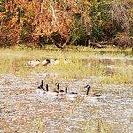 Springfield Conservation Nature Center照片