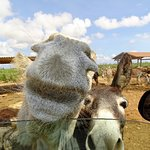 Photo of Donkey Sanctuary Bonaire