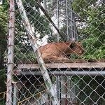 Foto de Centro de Rescate Las Pumas
