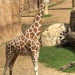 Dallas Zoo صورة فوتوغرافية