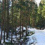 Bilde fra Djupadalen