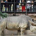 Фотография Зоопарк Барселоны