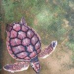 Foto de Sea Turtle Hatchery