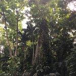 صورة فوتوغرافية لـ Turtle River Falls and Gardens