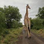 Foto de Mkhuze Game Reserve