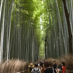 Photo of Bamboo Forest Street