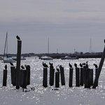 MacMillan Wharf Foto
