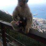 صورة فوتوغرافية لـ Gibraltar's Inside Out Rock Tours